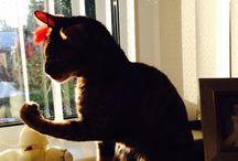 JACK the Bengal cat