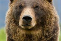 Beren leven