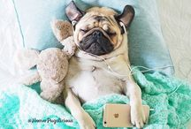 Social Pug Profiles / Social Pug Profiles is a fortnightly feature of pugs from all over the social media scene where these pugs sit down for an interview with The Pug Diary.