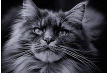 Mijn katten / foto's van mijn katten