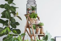 Plants In The Home / Bringing plants into the home is a great way of creating colour, bringing the outdoors in and refreshing your homw