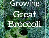 Growing Brassicas