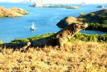 Rinca island / Komodo tour to Rinca island which is recommendation for tours to Komodo national park in Indonesia