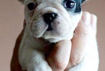 Chien / Mignon petits chiens