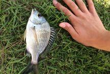 Fishing / Fishing