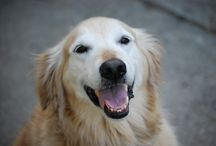 Why we ALL love our dogs! / The best things about having a pet pooch!