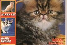 Revistas de mascotas - nº1 -s.XX