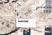Create // Pantone Pantastic Ideas