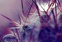 rosée drop rain / une goutte , des gouttes, juste assez pour enchanter tout