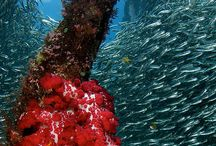 Diving Raja Ampat / Diving in the heart of the coral triangle, the worlds highest marine biodiversity