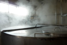 Inside The Brewery / Everything Brewery related, stainless steel, wood and whole plants!
