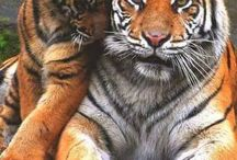 Grandes felinos