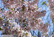 My Flower Photos / Photos I took of flowers. / by Shinrin Art