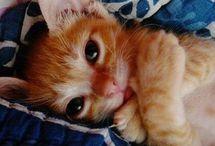cute,sweet animals..