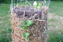Potato plants / Growing potatoes