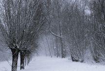 Winter Wonderland / by Heather Oberg