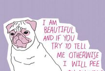 All of Pugs