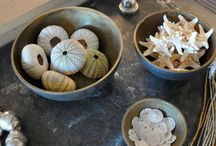 Seashells and Sealife Inspired / Design and Decor using Seashells, Starfish and Sea Urchin. / by Seaside Inspired Boutique