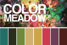 All about color! / Different ways to match and combine colors for your home. Everything you need to know from deciding on a color to the final application.