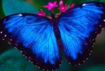 Beauty of Butterflies / by Blanche Hayden