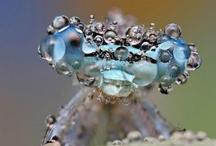 Dragonflies / by Heather Sorensen