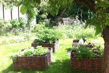 Jardin / Culture en carres