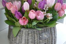 цветы и другая красота