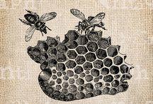 μελισσακια!!!