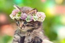 Cats *meow*