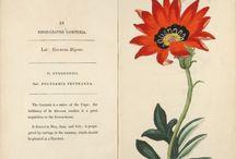 Artists / Illustrators / Library / by Chicago Botanic Garden