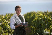 Weine Kroatien / Kroatische Weine / Weinexkursionen / Kosten Sie im Kroatien-Urlaub kroatische Weine!