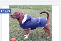 Doggy Fasion