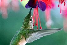 Flowers & Birds / Collection of pictures that show these 2 beauties in nature.