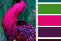 Gammes couleurs