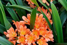 Flowers I want in my garden