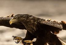 Eagles, Hawks, Majestic Creatures