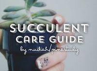 Succulents, air plants etc