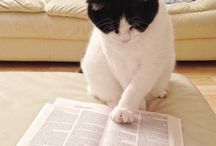 Cats Fighting Ignorance / Everyday cats proving books are amazing.
