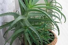 Plants I Love