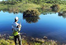 Black Bass / Toda la información sobre la Pesca del Black Bass y las mejores imágenes!