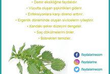 bitkilerin faydaları