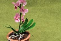 mini plants flowers