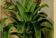 Botanicals / by Wanda Crossley  Matthews House & Garden