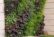 Living Walls / by Lis Meyer