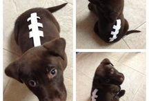 Halloween: Doggie Style