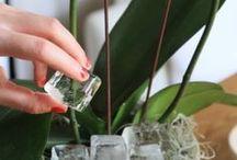 tip voor kamerplanten bewateren