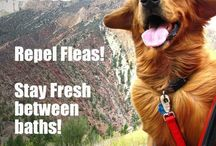 Furry Friends tips / by Kori Linae Carothers