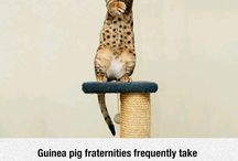Weird and cool animal facts