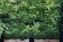 Landscaping / by Amanda Moore