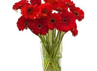 Bangalore Online Flowers and Gifts / http://www.lovenwishes.com/bangalore.htm